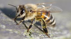 HoneyColony Bee Manifesto -  We strive to bee the change by joining with our readers, writers, activists, and bloggers to share information,...