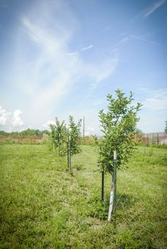 ► How we made our home orchard. Check it out: http://gmsoap.co/1jjTFfv #fruit #healthy