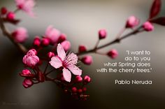 pablo neruda, cherry trees, quotes