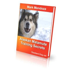http://obedient-dog.net/dog-breeds/alaskan-malamute-training-secrets.html  If you want to know all about the Alaskan Malamute, your best solution is the new Alaskan Malamute training book. With the Alaskan Malamute training book you will know how to train an Alaskan Malamute. With the Alaskan Malamute training book your dog will obey all your rules.
