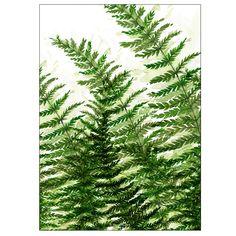 paprotkowy las 30x40 cm - Margo Hupert - plakat