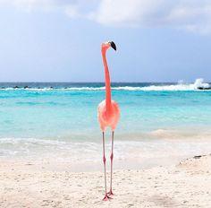 Happy Monday from Aruba!
