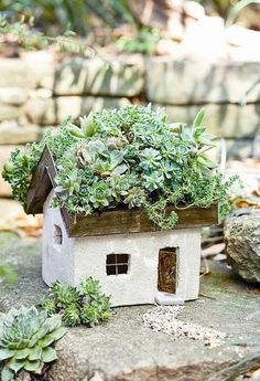 adorable fairy house with succulent roof!