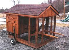 Raising Chickens 101: Building a Backyard Coop