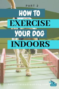 Regular exercise is SO important for your dog! Unfortunately, the weather doesn't always cooperate to make outdoor exercise possible. Get recommendations for some indoor equipment, games, and activities to workout your dog.  A well-exercised dog is a tired dog.  A tired dog equals a happy owner! Pin to save for a rainy day! Read parts 1