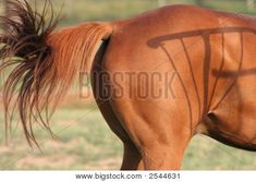 ♞Pinterest ➝ LimitlessSkyy♘ Horse Tail, Horse Bridle, Mane N Tail, Bing Images, Horses, Model, Hair, Animals, Ponytail