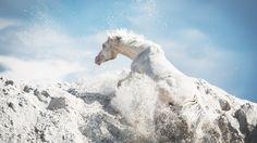 Equestrian photography : Pola Gałczyńska.