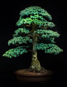 Botanical photographer Jonathan Singer worked with William Valavanis, director of the International Bonsai Arboretum in Rochester, NY to gain access to the premier bonsai collections in Japan.