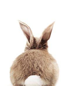 cute baby animals Bunny Back Hand amp; Bath Towel by Jean Holland - Baby Animals - Hand Towel Cute Baby Bunnies, Cute Baby Animals, Animals And Pets, Cute Babies, Towel Animals, Lapin Art, Image Deco, Cute Cows, Bunny Art