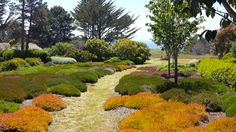 Moss garden in Mendocino, CA. Posted on Garden Design by Carolyn Mullet FB page.
