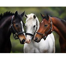 Cute Horse Names – Best Ideas! Cute Horse Names: If you have bought a lovely Horse at your home and still if you are searching for a Horse Photos, Horse Pictures, Animal Pictures, All The Pretty Horses, Beautiful Horses, Animals Beautiful, Farm Animals, Animals And Pets, Cute Animals