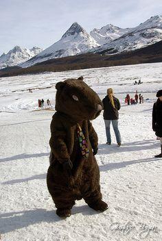 Castor in Ushuaia, Patagonia