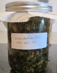 How to make dandelion oil for sore muscles - and several other oils.