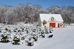 Barn built by Yankee