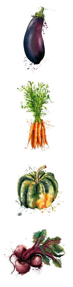 Vegetables illustration, drawing / Verdure, illustrazione, disegno - Art by Georgina Luck