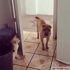 Cat closes door on dog | Gif Finder – Find and Share funny animated gifs