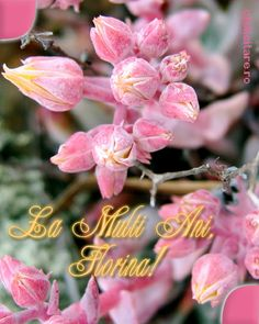 Felicitare de Florii cu mesajul La multi ani, Florina! Pink Pages, Pretty In Pink, Thoughts, Plants, Hip Bones, Cute, Planters, Ideas, Plant