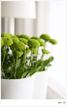 boutonnieres - chartreuse button mums