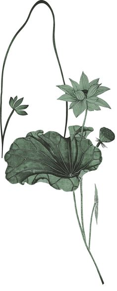 Lotus, Plant Leaves, Bamboo, Illustration Art, Paintings, Texture, Black And White, Abstract, Flowers