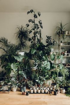 Haarkon House - an Autumnal Update Our latest Haarkon plant family portrait.Our latest Haarkon plant family portrait. Indoor Garden, Indoor Plants, Plantas Indoor, Decoration Photo, Decoration Plante, Room With Plants, Plants Are Friends, Green Rooms, Interior Plants