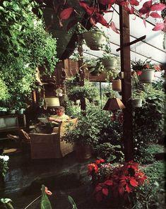 houseplants.jpg 500×629ピクセル