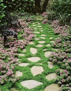 Stepping stones In the Garden... you can walk on the plants ... those look like what I have