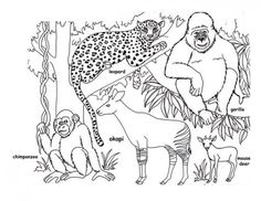 RainForest Coloring Pages Picture 15