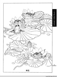 工笔画白描---春夏(一) - 水韵清香 - 水韵清香