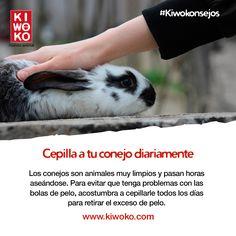 #Kiwokonsejos Y si decides bañar a tu conejo, no lo hagas más de dos veces al año.