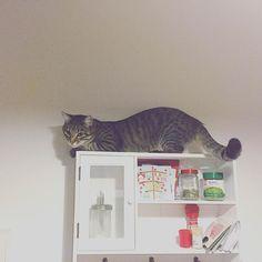 Another great viewing platform.  #luckythecat #love #cute #catsofsalzburg #unterfoehring #germany #cat #meow #ilovemypet #catlovers #lovekittens #instapet #catsagram #kitten #kitty #catstagram #kittycat #catsofinstagram #ilovemycat #catlove #catoftheday #furry #cats_of_instagram #cats #catlife #katze #katzenliebe #miezekatze #bestmeow