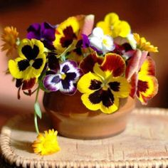 Yellow Pansy picture