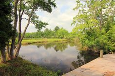 Fish right off your own pier! Pond stocked with yellow catfish, large mouth bass, sun perch and minnows.