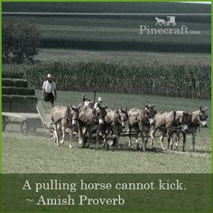 A pulling horse cannot kick ~ Amish Proverb