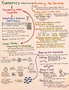 Introductory Biochemistry Flowcharts – Love, Life and Position-time Graphs Study Biology, Biology Lessons, Ap Biology, Science Biology, Life Science, Biology Classroom, Biology Teacher, Teaching Biology, Biochemistry Notes