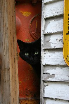 """Cats like doors left open, in case they change their minds."" --Rosemary Nisbet"