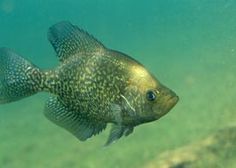 How to go crappie fishing