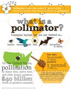 What is a pollinator, and why are they important to our food system?  #infographic #pollinator #beefriendly #savethebees