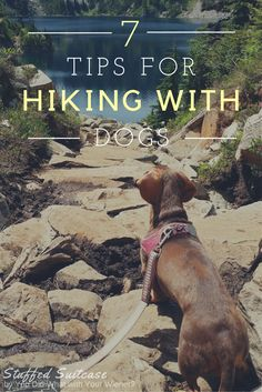 Helpful Tips for Hiking with Dogs and what to pack for fun and keeping your furry friends safe!