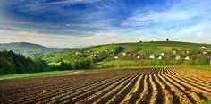 Potato Field, Pogorze Roznowskie. Poland. Fot  Janusz Wanczyk
