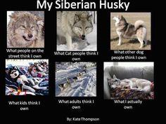 So true . I love my Tygra . Miss her . I will own another Siberian again very soon .
