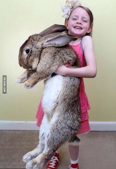 Darius the 50 pound, 4 foot 4 inches bunny rabbit from Worcester, England that is now officially the world's biggest!