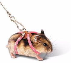 coleira hamster guia peitoral roedor gaiola