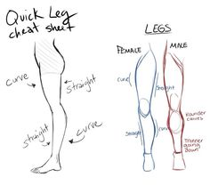 Two simple leg sheets. [ #ref #body #legs #male #female #sexdifference #anatomy ]