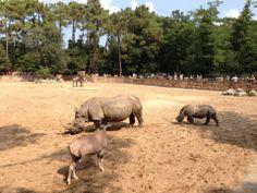 Zoo de la Palmyre w Les Mathes