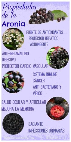 Propiedades de la Aronia – Club Salud Natural