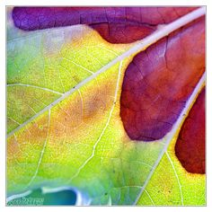 Nature's color palette by *DianePhotos on deviantART