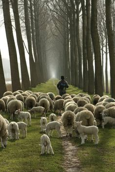 John 10:27  27	My sheep hear My voice, and I know them, and they follow Me: