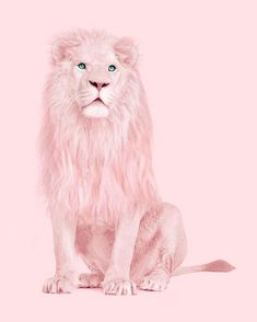 Juniqe Wandbild Albino Lion von Paul Fuentes in , Gerahmtes Papier Lion Wallpaper, Pink Wallpaper Iphone, Aesthetic Iphone Wallpaper, Cartoon Wallpaper, Aesthetic Wallpapers, Wallpaper Backgrounds, Wallpapers Rosa, Cute Wallpapers, Pink Love
