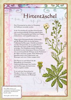 Hirtentäschel - Famous Last Words Healing Herbs, Medicinal Herbs, Black Sesame Ice Cream, Herbal Essences, Fitness Planner, Plant Illustration, Woodland Party, Holiday Cocktails, Types Of Flowers