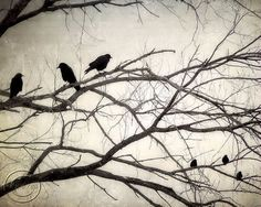 """Crow Print, Crows and Blackbirds 8"""" X 10"""" Fine Art Photography Print, Mysterious, Magical and Ethereal, Decree at Sunset"""